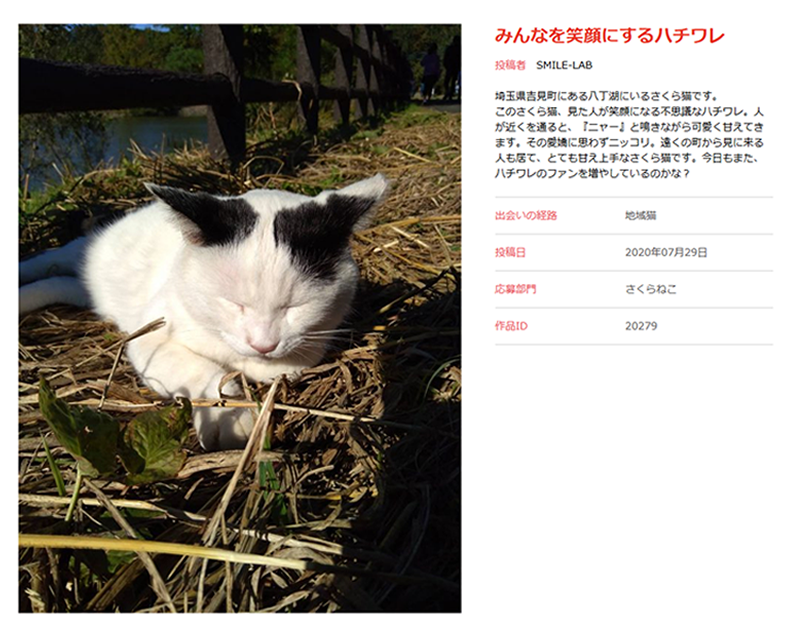 さくら猫(SMILE-LAB)